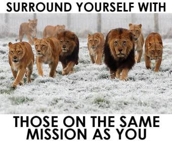 MercyfulGrace Blog - Lions
